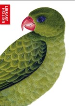 BLUE-BACKED OR MULLER'S PARROT (NOTECARD PACK CONTAINING SIX CARDS OF THE SAME DESIGN)