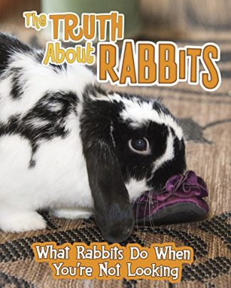 TRUTH ABOUT RABBITS | WHAT RABBITS DO WHEN YOU'RE NOT LOOKING